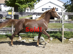 SOLD! - Windfield Isabella 2011