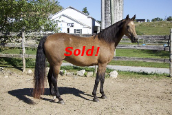 SOLD! - Windfield Camelot
