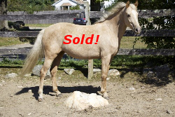 SOLD! - Windfield Honeysuckle 2010