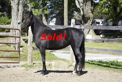 SOLD! - Windfield Isadora 2011
